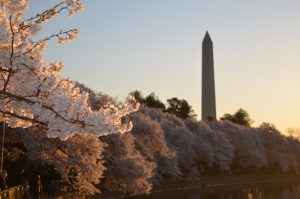 10 Places to Visit in Washington D.C.